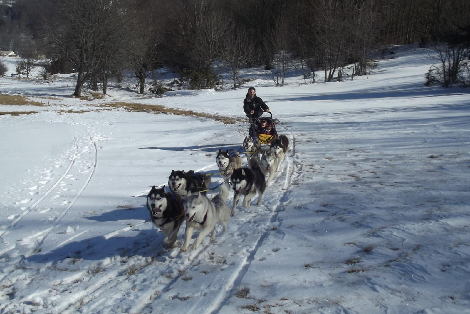 Kart à chien pour 2 - Jelet Mushing - Maine-et-Loire (49
